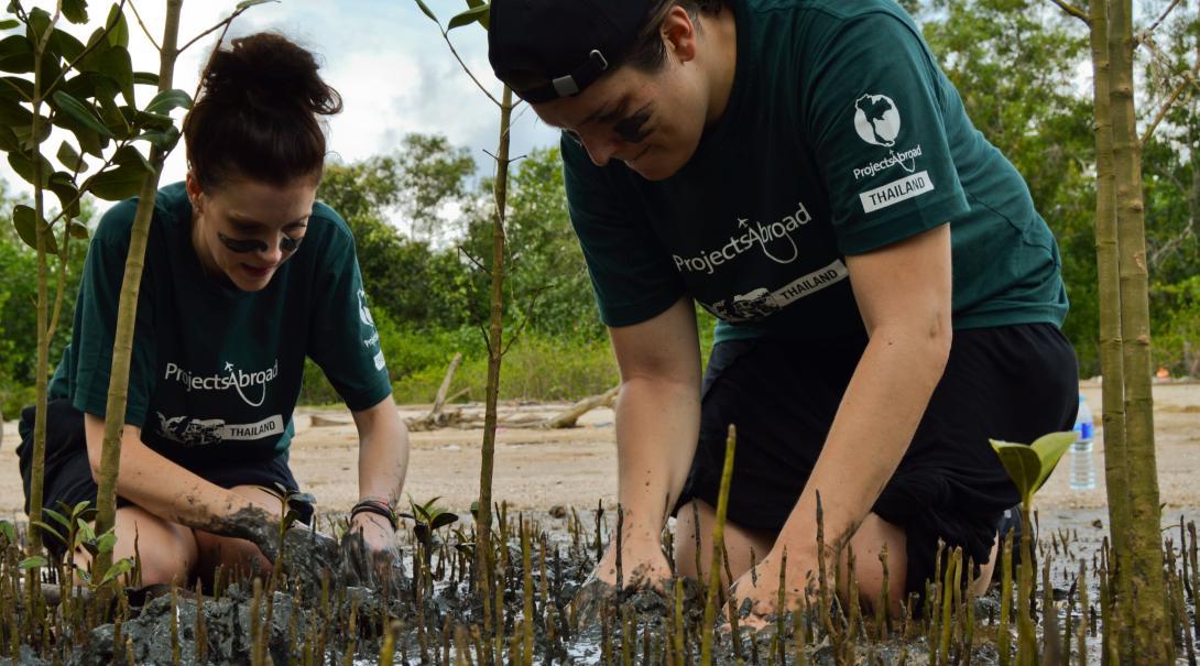 Project Abroad marinvårdsvolontärer i Thailand gräver försiktigt mangroveträd för att återplantera dem till stränder där det finns mer plats